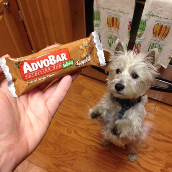 AdvoCare Gingerbread Bars
