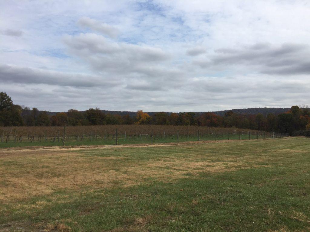 Notavia Winery Virginia