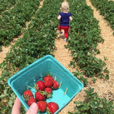 Sweet Strawberry Picking